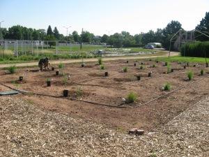 grass study plots 7.25.12 002