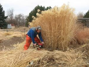 Dave cutting grasses