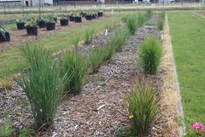 Grass 2 (2)