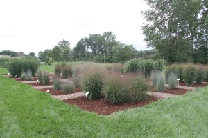 Springfield, Ohio Ornamental Grass Trials site